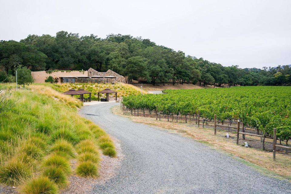 """<p><a href=""""https://www.stagsleapwinecellars.com/"""" rel=""""nofollow noopener"""" target=""""_blank"""" data-ylk=""""slk:Stag's Leap Wine Cellars"""" class=""""link rapid-noclick-resp"""">Stag's Leap Wine Cellars</a> achieved icon status after winning the famous blind tasting at the 1976 Judgment of Paris, just six years after purchasing the namesake vineyard. The winery is known for its Cabernet Sauvignon and produces a variety of reds and whites.</p><p>The FAY Outlook & Visitor Center opened in 2014 to provide wine enthusiasts a uniquely immersive tasting experience with stunning panoramic views. The building is designed to be enjoyed during all four seasons, and there is plenty of programming to keep visitors coming back for more. </p><p>Stag Leap Wine Cellars's flagship tasting experience is the Cellarius Kitchen Experience, which offers a tasting of four world-renowned wines alongside local dishes created by the winery's chef. There's also a Judgment of Paris 45th Anniversary S.L.V. Tasting happening this year that features a tasting of four vintages from the winery's Legacy Collection.</p>"""