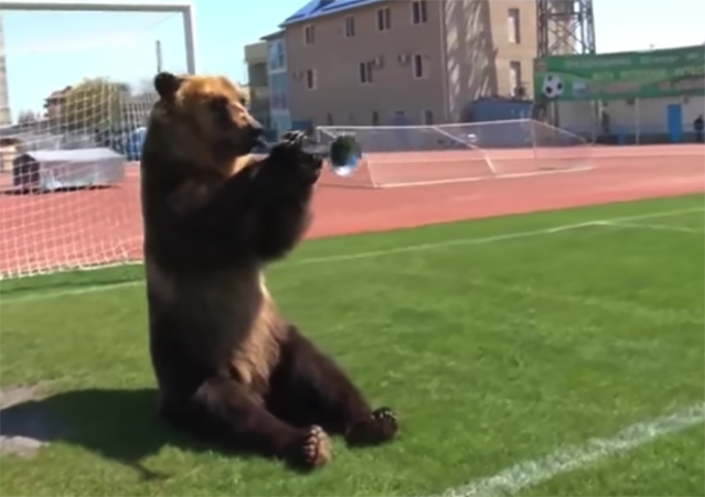 A bear was seen playing the vuvuzela in the back of a jeep in Russia on Thursday following the country's win to open the World Cup. (Youtube)
