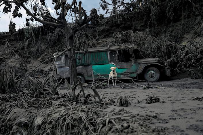 A dog, left in a garage covered with ashes, barks nearby the erupting Taal Volcano in Talisay, Batangas, Philippines, January 13, 2020.