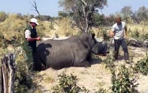 Prince Harry during his visit to southern Africa as he helps sedate a Rhino in Botswana - Credit: PA