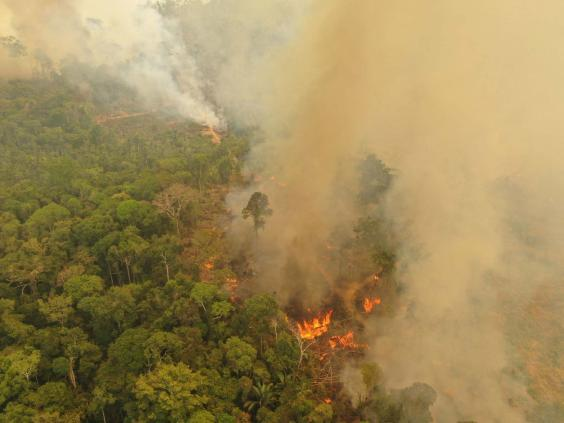 A fire burning in Porto Velho, Brazil, one of the world's oldest and most diverse tropical ecosystems and one of the most endangered on the planet (Michael Dantas/WWF/PA Wire)