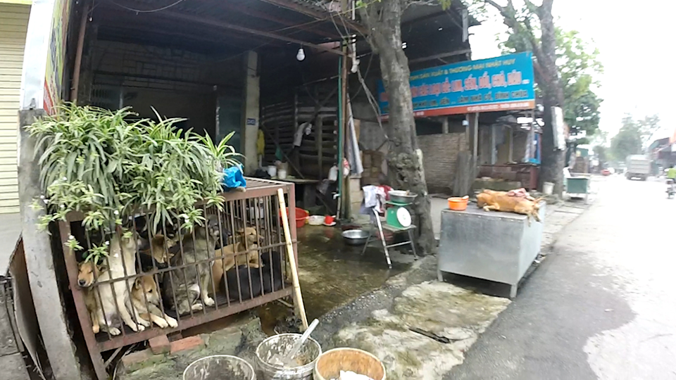 GoPro still of dogs awaiting slaughter at a wet market in Hanoi. Carcasses can be seen in the background.