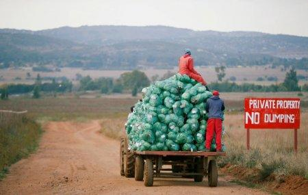 FILE PHOTO: Farm workers harvest cabbages at a farm in Eikenhof, near Johannesburg, South Africa May 21, 2018. REUTERS/Siphiwe Sibeko/File Photo