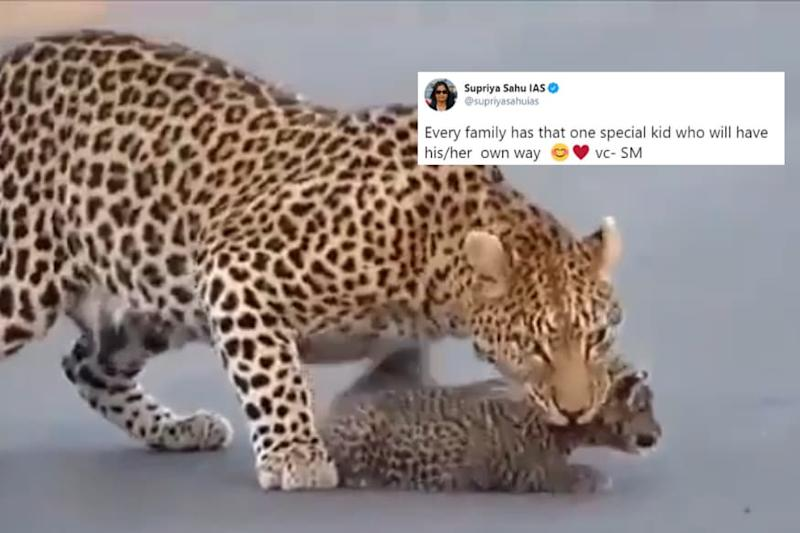 Leopard Mom Dealing With its Cub's Tantrums Proves the Struggle Across Species is Real