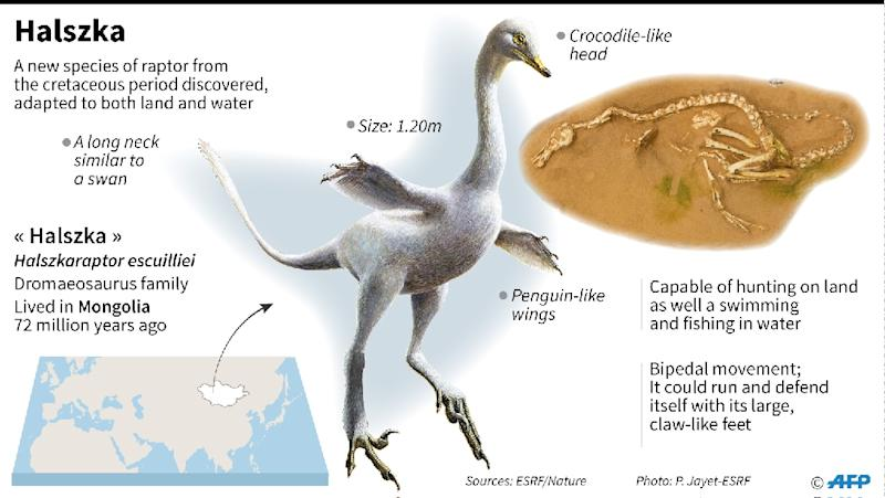 Recently discovered dinosaur Halszka, adapted to both land and water (AFP Photo/Sébastien CASTERAN)