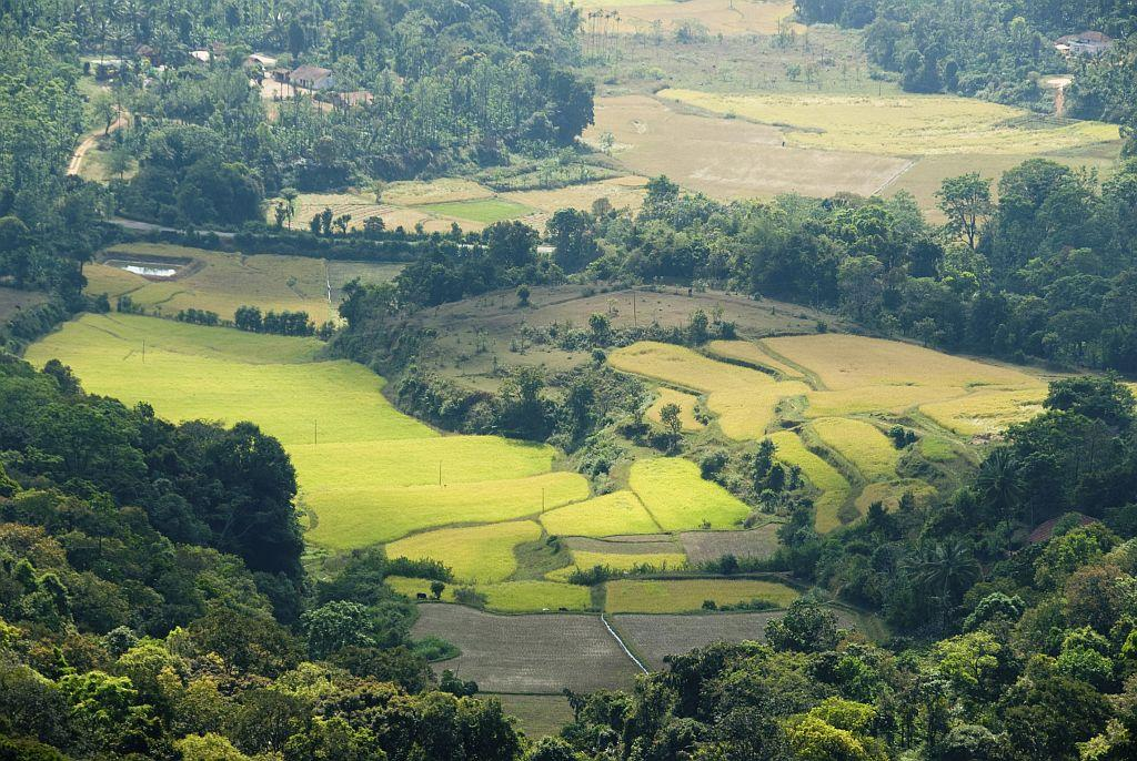 """<strong>1. COORG</strong><br />""""Coorg is nature's haven. A place to relax and get away from the hassles of life,"""" says HolidayIQ traveller Shobha from Kochi. It has everything you need in a relaxed holiday. Pleasant weather and yummy coffee - just the ingredients you need to curl up with a book and relax. Since it is well connected to cities like Mysore and Bangalore, reaching there is not a problem for women travellers. Moreover, Coorg has a large number of homestays, which are perfect for women travelling alone. Some well known ones offer great hosts, good food and a chance to experience Coorg like a local. HolidayIQ traveller Riccha Kumar from Delhi suggests, """"Go river rafting in Cauvery, which beats rafting in Rishikesh! Do taste some Coorg coffee. My advice is, try and find a hotel in the outskirts of the town in places like Hallimane."""""""