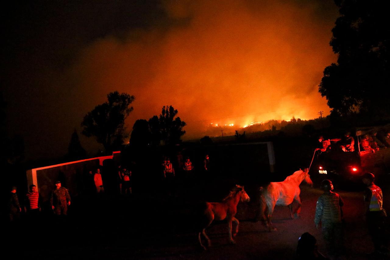 <p>A mare and her foal are lead to safety as a wildfire burns in Portezuelo, Chile, Sunday, Jan. 29, 2017. (AP Photo/Esteban Felix) </p>