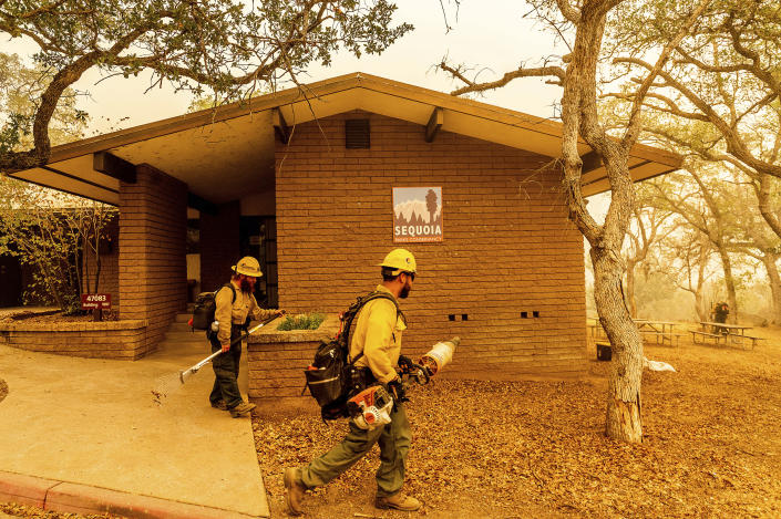 As the KNP Complex Fire approaches, U.S. Forest Service firefighters Armando Flores, right, and Heron Hilbach-Barger clear vegetation around structures at the Ash Mountain headquarters in Sequoia National Park, Calif., on Wednesday, Sept. 15, 2021. The blaze is burning near the Giant Forest, home to more than 2,000 giant sequoias. (AP Photo/Noah Berger)
