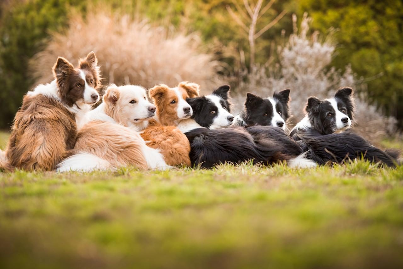 <p>Tamara Kedves from Hungary won the 'I Love Dogs Because…' category, which was open to entrants aged between 12 and 17 years old. [Picture: Tamara Kedves/Kennel Club] </p>