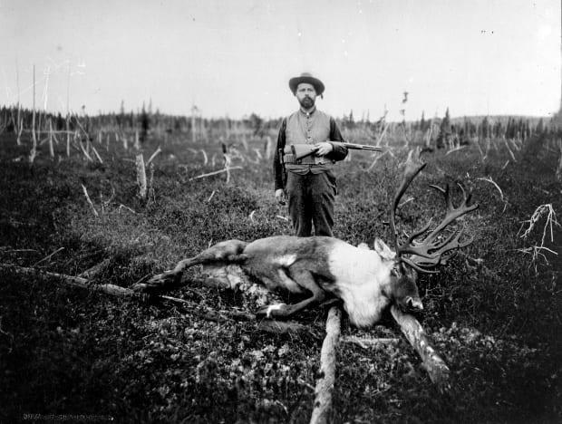 This photo from the Provincial Archives of New Brunswick shows a woodland caribou. The note with the photo simply said 'last caribou shot in NB.' It is dated between 1906 and 1912.