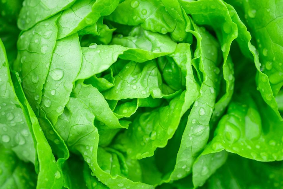 """<p>Do, however, transfer the lettuce to a plastic or glass storage container as soon as you get home. Add a few sheets of paper towels at the top and bottom of the container. The paper towel should effectively absorb any excess moisture that would ordinarily result in lettuce going bad before you can use it, allowing you to use the leafy greens for <a href=""""https://www.thedailymeal.com/best-recipes/50-sensational-salad-recipes-0?referrer=yahoo&category=beauty_food&include_utm=1&utm_medium=referral&utm_source=yahoo&utm_campaign=feed"""" rel=""""nofollow noopener"""" target=""""_blank"""" data-ylk=""""slk:refreshing, satisfying salads"""" class=""""link rapid-noclick-resp"""">refreshing, satisfying salads</a>. </p>"""