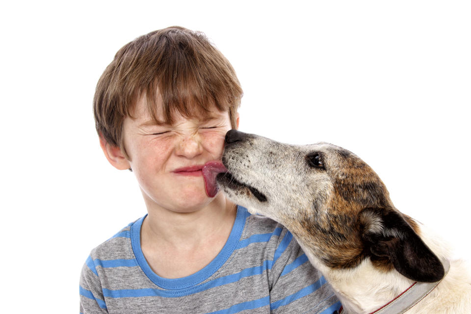 An old dog licking a little boy's face. Isolated on white.