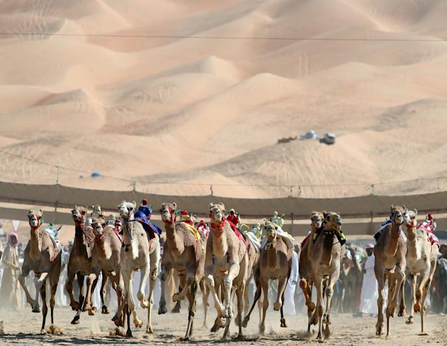 <p>Camels race during the Moreeb Dune Festival on Jan. 1 in the Liwa desert. (Photo: Karim Sahib/AFP/Getty Images) </p>