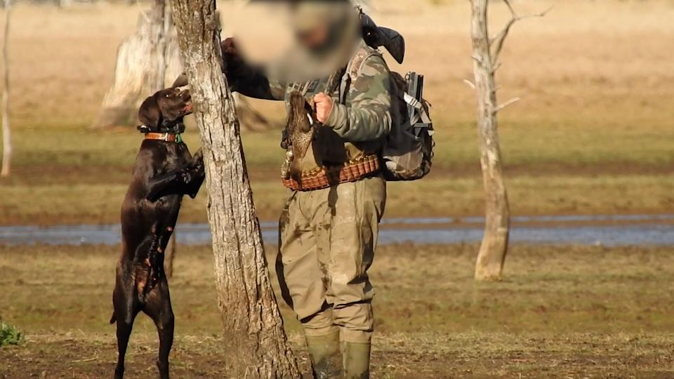 A video image alleging a hunter was blooding his dog after shooting the duck. Source: Supplied