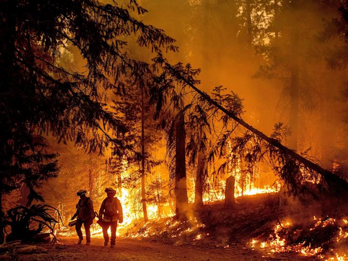 Two firefighters stand in front of a burning tree.