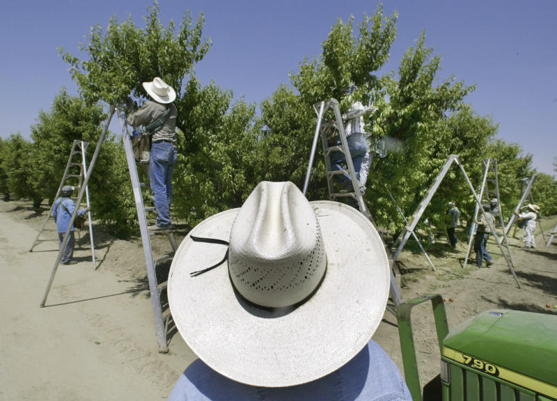 FILE - In this May 13, 2004 file photo, a foreman watches workers pick fruit in an orchard in Arvin, Calif. A widely used agricultural pesticide that California environmental officials have said has been linked to brain damage in children will be banned after next year under an agreement reached with the manufacturer, state officials announced Wednesday, Oct. 9, 2019. The pesticide is used on numerous crops in the nation's largest agriculture-producing state, including alfalfa, almonds, citrus, cotton, grapes and walnuts. (AP Photo/Damian Dovarganes, File)