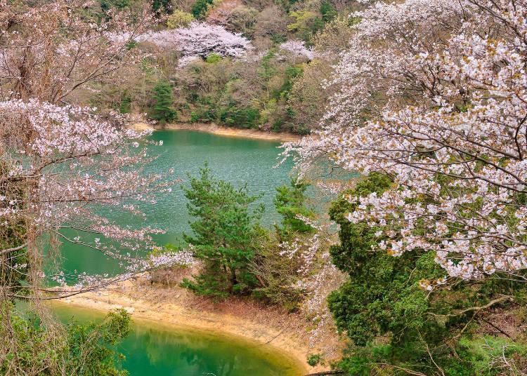 """A natural park selected as one of Japan's """"100 Best Water Source Forests"""""""