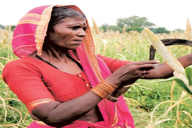 price support programme,  agricultural price support programme,  GDP,  Green Revolution technology,  India price support policy,  MSP,  e-NWR,  NABARD