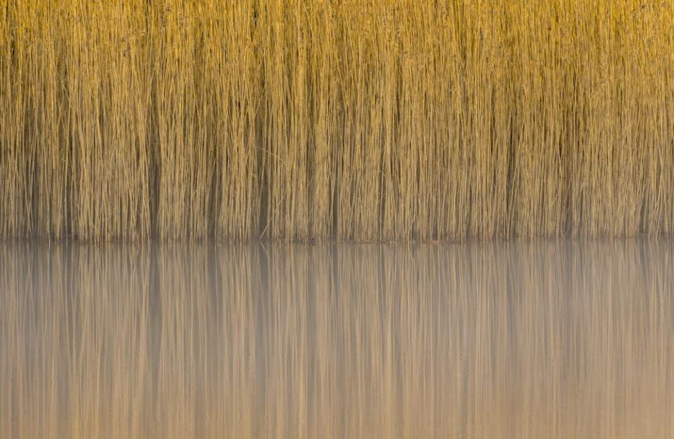 """<p>The thousands of entries included this image of Common Reeds on Lindow Common in Wilmslow, Cheshire, by Steve Palmer, who won the Botanical Britain category. [Picture: Steve Palmer/<a href=""""http://www.bwpawards.org"""" rel=""""nofollow noopener"""" target=""""_blank"""" data-ylk=""""slk:www.bwpawards.org"""" class=""""link rapid-noclick-resp"""">www.bwpawards.org</a>] </p>"""