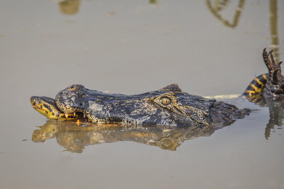 The crocodile was reportedly killed in the fight (Picture: SWNS)