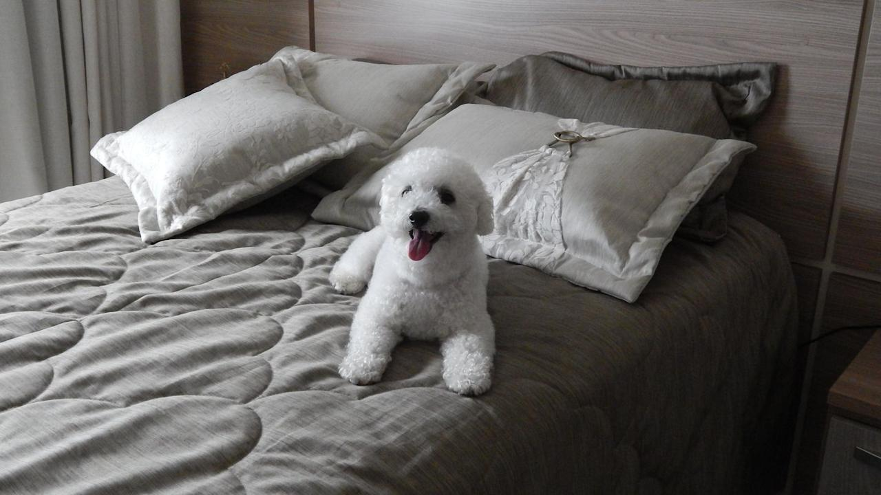 "<p>Bichon Frises adapt <a href=""https://dogtime.com/dog-breeds/bichon-frise"" target=""_blank"">really well to apartment living</a>, according to Dog Time, though they do not do well with being alone. If you can't stay at home with your Bichon for most of the day, you might want to consider hiring a dog walker or pet sitter.</p>"