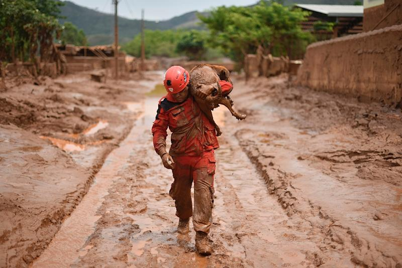 A fireman rescues a dog that was trapped in the mud that swept through Bento Rodrigues, in Minas Gerais, Brazil on November 9, 2015 (AFP Photo/Douglas Magno)