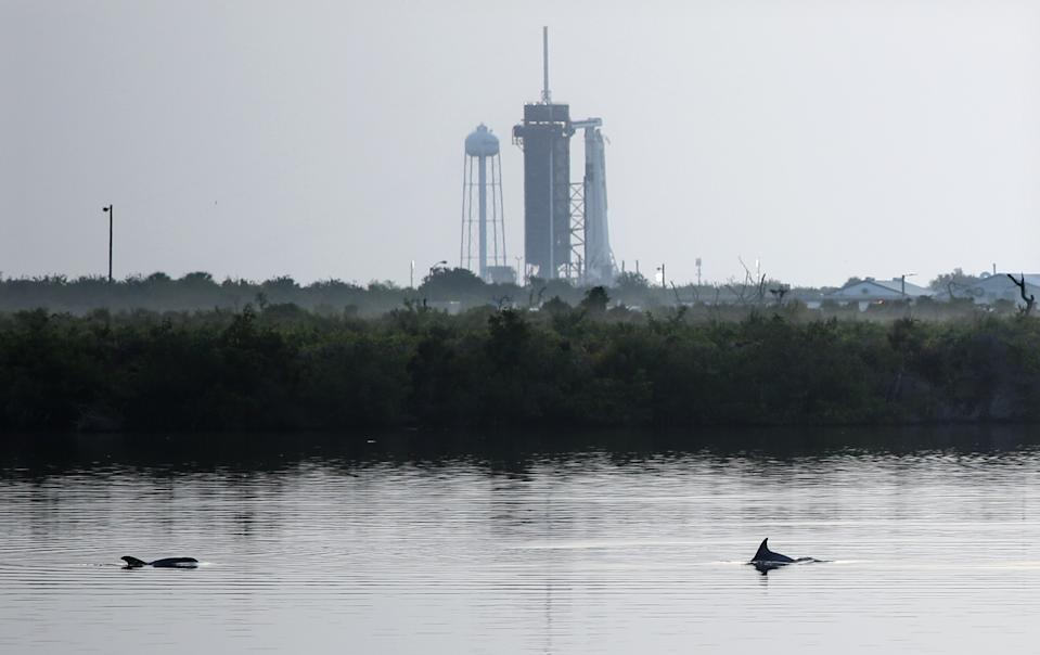 Dolphins swim in a lagoon near Launch Complex 39A at sunrise at Kennedy Space Center in Florida on May 30, 2020. Photo: GREGG NEWTON/Gregg Newton/AFP via Getty Images)