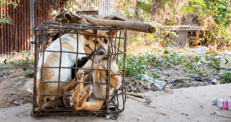 Dog meat is a popular dish in parts of Vietnam. Source: Four Paws