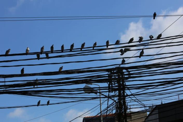 FILE PHOTO: Birds sit on electricity cables in Tyre, Lebanon July 18, 2020. Picture taken July 18, 2020.