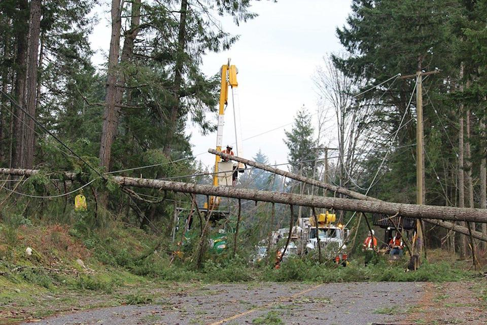 Downed tres/BCHydro
