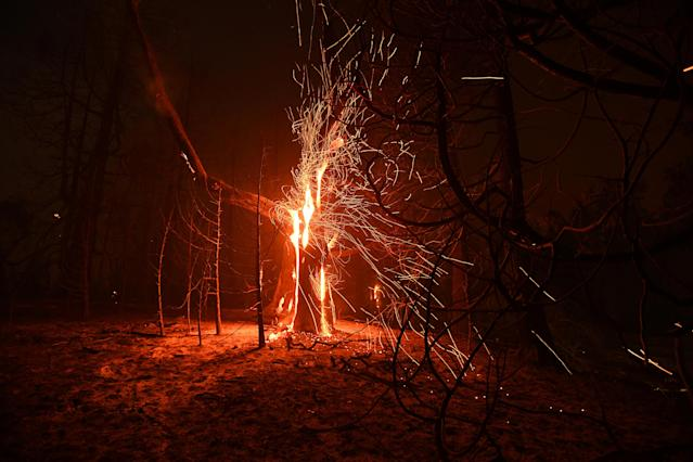 <p>Embers fly from a tree as the Ponderosa fire burns east of Oroville, Calif., Aug. 29, 2017. (Photo: Noah Berger/Reuters) </p>