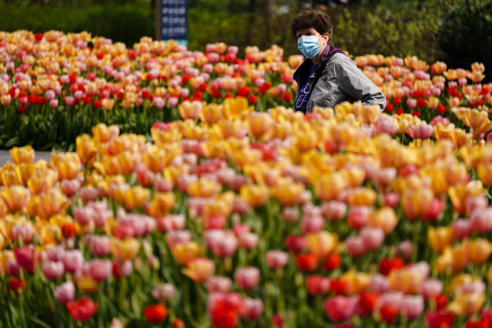 A person wearing a face mask as a precaution against COVID-19 walks between beds of tulips at Dilworth Park in Philadelphia, Wednesday, April 14, 2021. (AP Photo/Matt Rourke)
