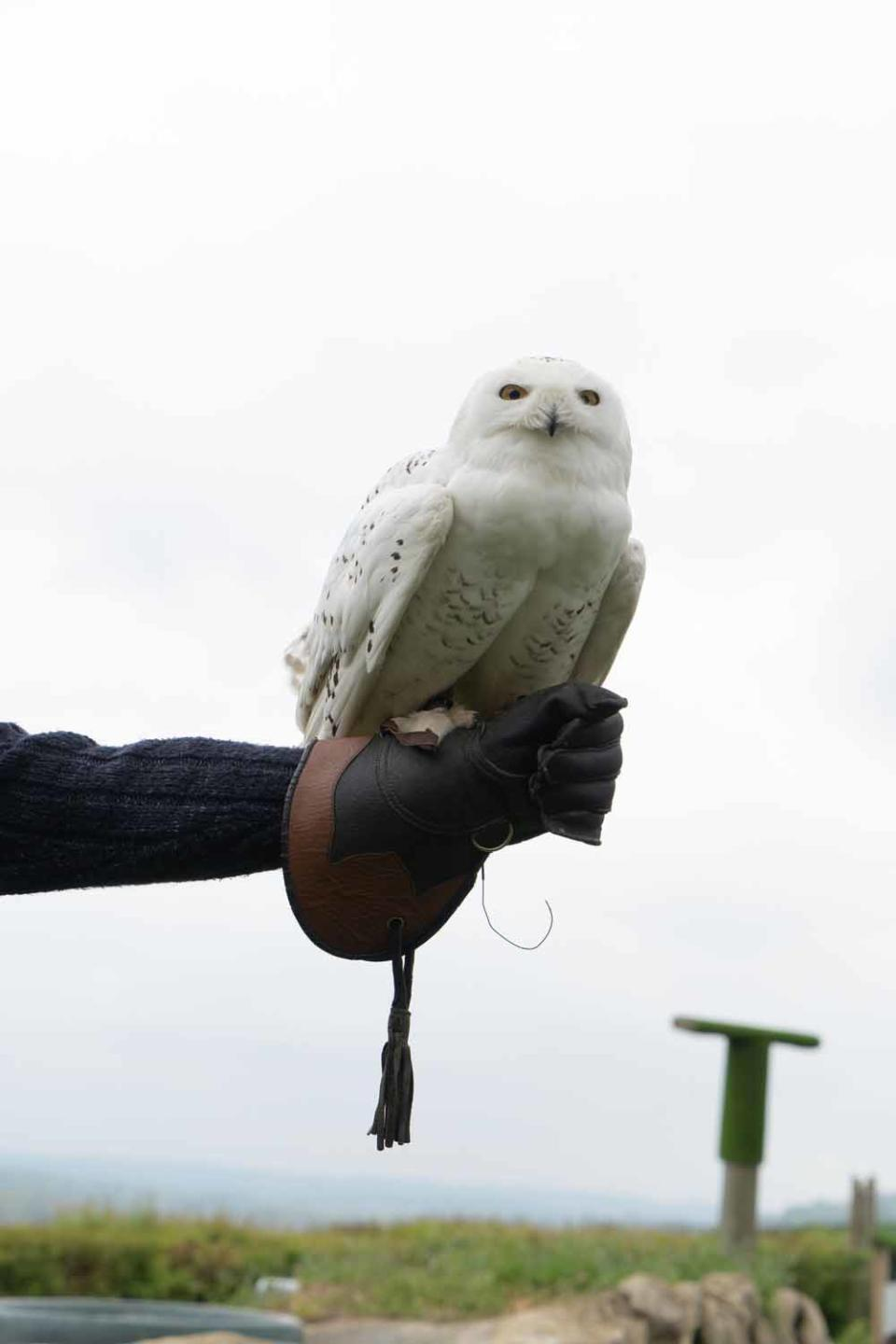 Samantha has been flying birds of prey since she was eight years old (PA Real Life/Virgin Experience Days).