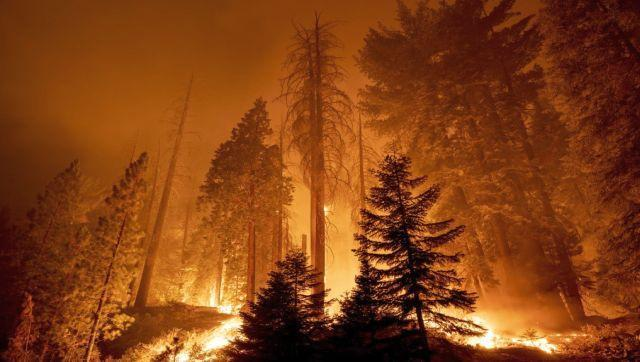 Hundreds of firefighters were battling to protect several groves of giant sequoias in the United States, warning the enormous ancient trees were at risk from out-of-control blazes. A number of separate fires were converging on the California woodland that is home to the huge trees, highlighting the terrifying power of wildfires to consume everything in their path. AFP