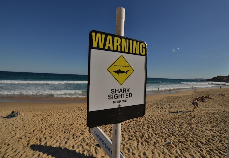 A total of 14 shark attacks have taken place this year in Australia's most populous state New South Wales