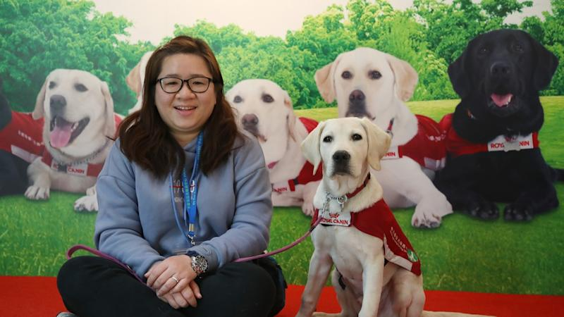 Hong Kong needs 1,700 guide dogs for the visually impaired, but where can the animals be trained?