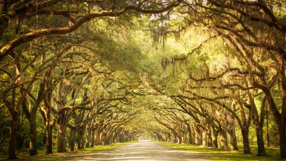 """<p>History runs through every oak-lined pathway, bustling town square, and lively establishment in Georgia's oldest city. Savannah boasts an impressive variety of jaw-dropping architectural styles, from the Regency gems such as <a href=""""https://www.telfair.org/"""" rel=""""nofollow noopener"""" target=""""_blank"""" data-ylk=""""slk:Telfair Academy"""" class=""""link rapid-noclick-resp"""">Telfair Academy</a> to fine examples of Steamboat Gothic style, like the <a href=""""https://gingerbreadhouseevents.com/"""" rel=""""nofollow noopener"""" target=""""_blank"""" data-ylk=""""slk:Gingerbread House"""" class=""""link rapid-noclick-resp"""">Gingerbread House</a>. There's an undeniable sense of newness and creativity as burgeoning designers and artists from <a href=""""http://www.scad.edu/"""" rel=""""nofollow noopener"""" target=""""_blank"""" data-ylk=""""slk:Savannah College of Art and Design (SCAD)"""" class=""""link rapid-noclick-resp"""">Savannah College of Art and Design (SCAD)</a> use the city as their laboratory to experiment and innovate.<br></p><p>Can't miss beautiful places: <a href=""""https://www.telfair.org/visit/jepson-center/"""" rel=""""nofollow noopener"""" target=""""_blank"""" data-ylk=""""slk:Jepson Center for the Arts"""" class=""""link rapid-noclick-resp"""">Jepson Center for the Arts</a>, <a href=""""https://www.circa1875.com/"""" rel=""""nofollow noopener"""" target=""""_blank"""" data-ylk=""""slk:Circa 1875"""" class=""""link rapid-noclick-resp"""">Circa 1875</a>, and Forsyth Park<br></p>"""