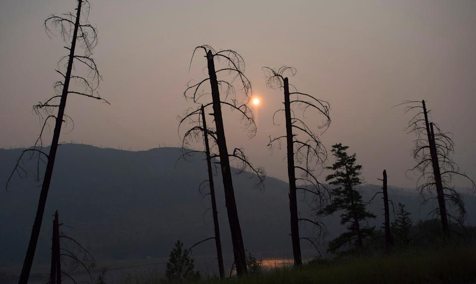 Burnt trees are pictured in front of a smoke-filled sky near Old Fort, B.C., on July 11, 2017. (Photo: Jonathan Hayward/The Canadian Press)