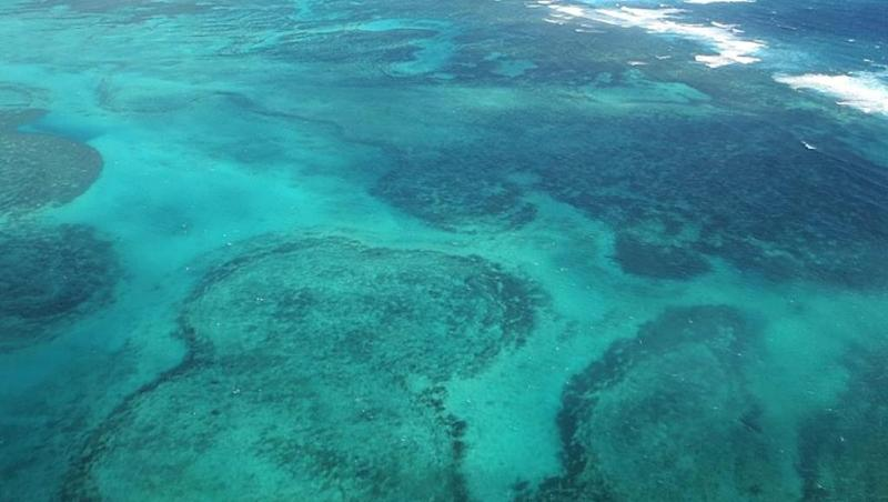 World's southern-most reef, Lord Howe Island, hit by coral bleaching