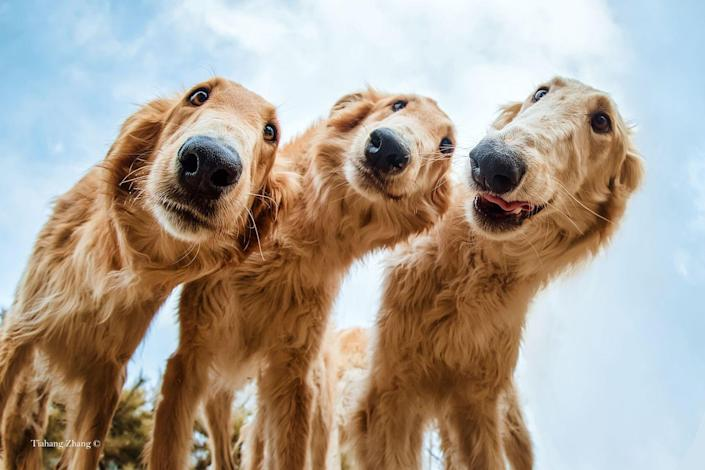 <p>These three rescue dogs were being adopted by the photographer's friend and have been captured looking as happy as can be outside. </p>