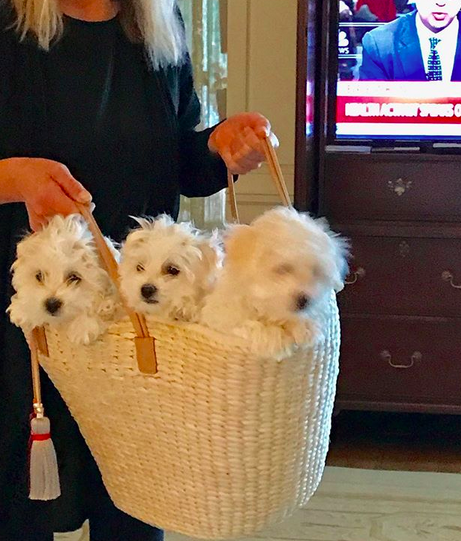 The star cloned her dead dog, Samantha, twice welcoming Miss Violet and Miss Scarlett. Source: Instagram / @barbrastreisand
