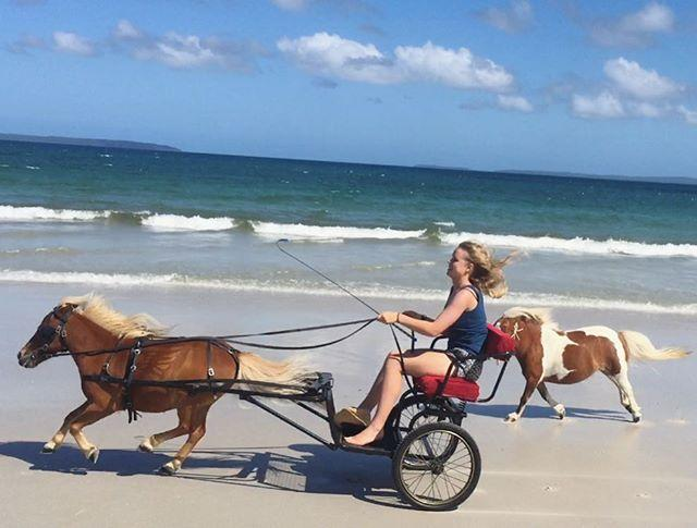 <p>Crunch and his trainer/owner, Hannah Pikkat, live down under in Sydney, Australia, where they play amongst the sand and sea. What a life.<br></p>