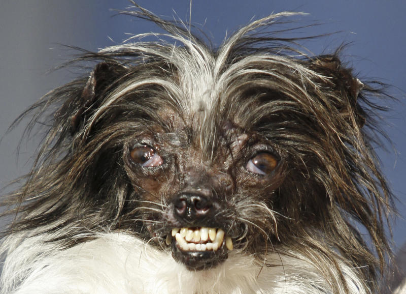 Meet the World's Ugliest Dog, 3-year-old Martha!