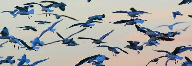A flock of seagulls swoops low over Portsmouth Harbour (Chris Ison/PA)