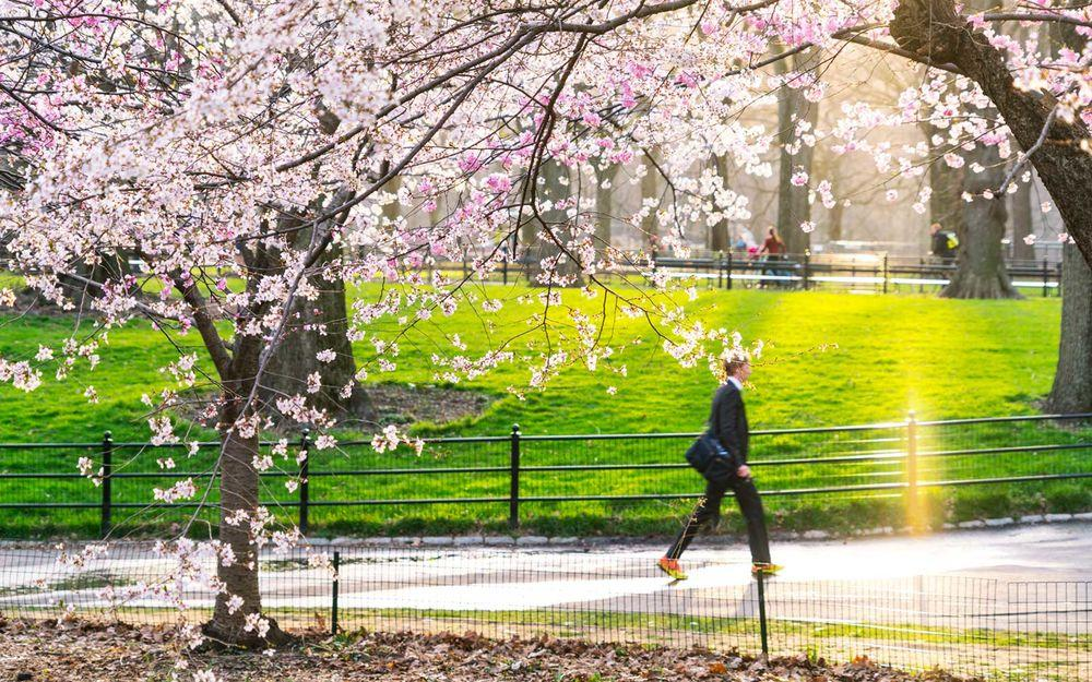 Cherry Blossom Festival 2020 Macon Ga.Cherry Blossoms 2019 Where And When To See Them Bloom
