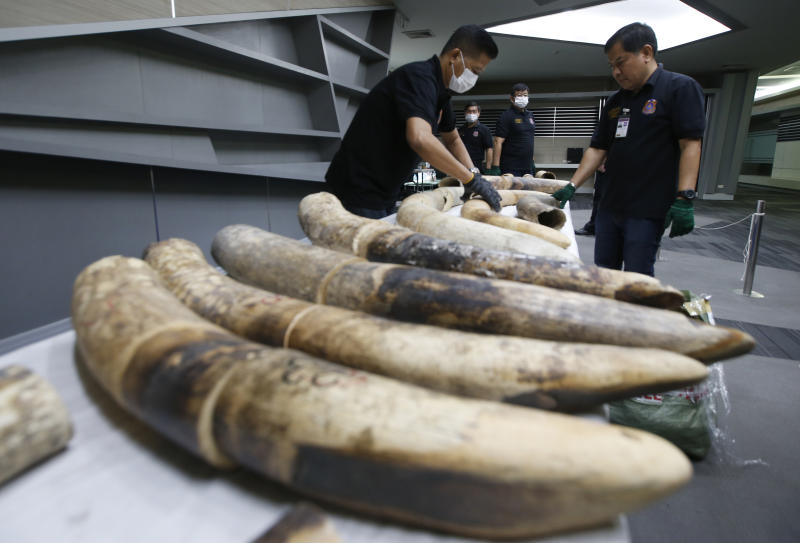 Thai customs officials display seized ivory during a press conference in Bangkok, Thailand, Friday, Jan. 12, 2018. Thai authorities seized 148 kilograms full elephant tusk and 31 tusk fragments originating from Nigeria destined for China worth over 15 million baht ($469,800). (AP Photo/Sakchai Lalit)
