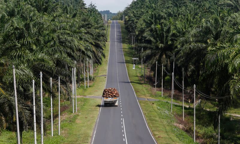 A truck carrying oil palm fruits passes through Felda Sahabat plantation in Lahad Datu in Malaysia's state of Sabah in Borneo