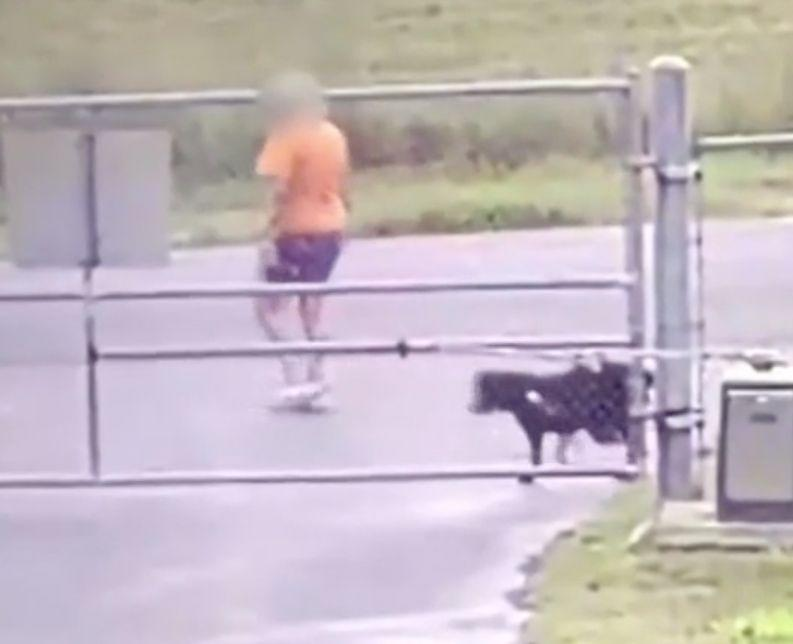 The dog struggled against its lead as its owner left it tied to the fence. Source: Kark