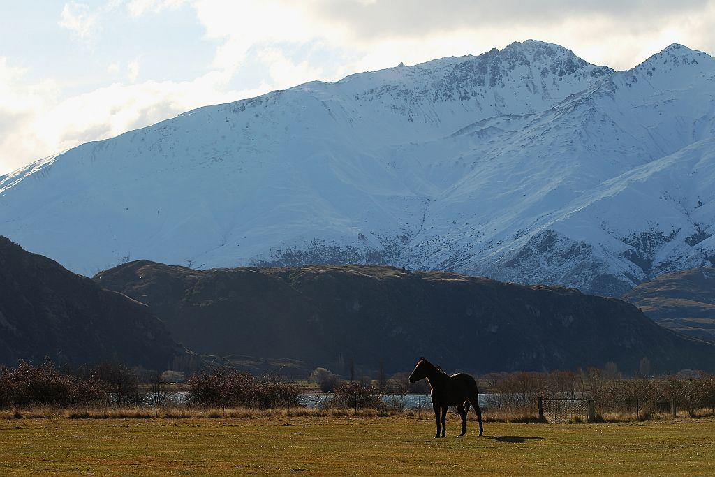 A horse on a property next to Lake Wanaka, New Zealand.