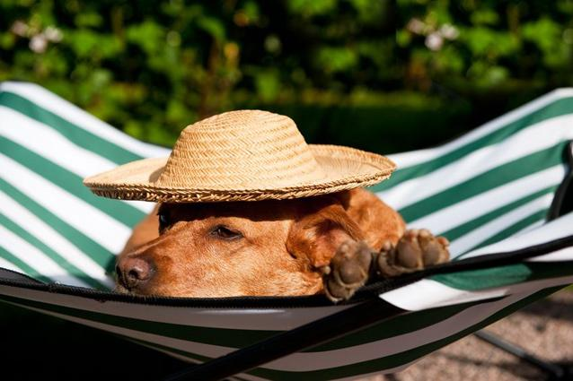 Indian Hotels That'll Pamper Your Pet